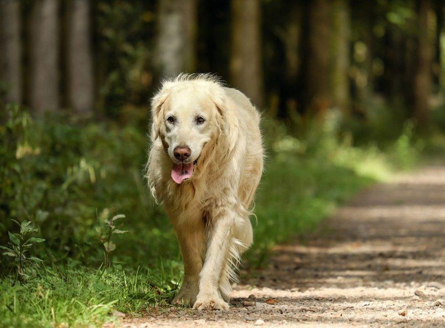 Avvelenamento nel cane: cause, sintomi e rimedi
