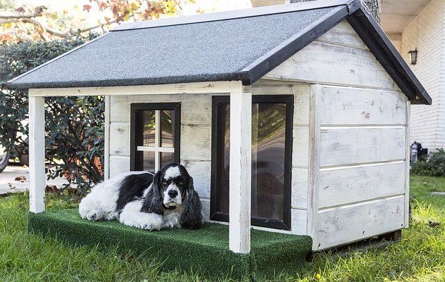 Le caratteristiche ideali di una cuccia per il cane