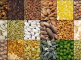 Proteine vegetali complete quali sono
